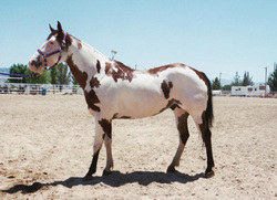 Prunty Ranch horses