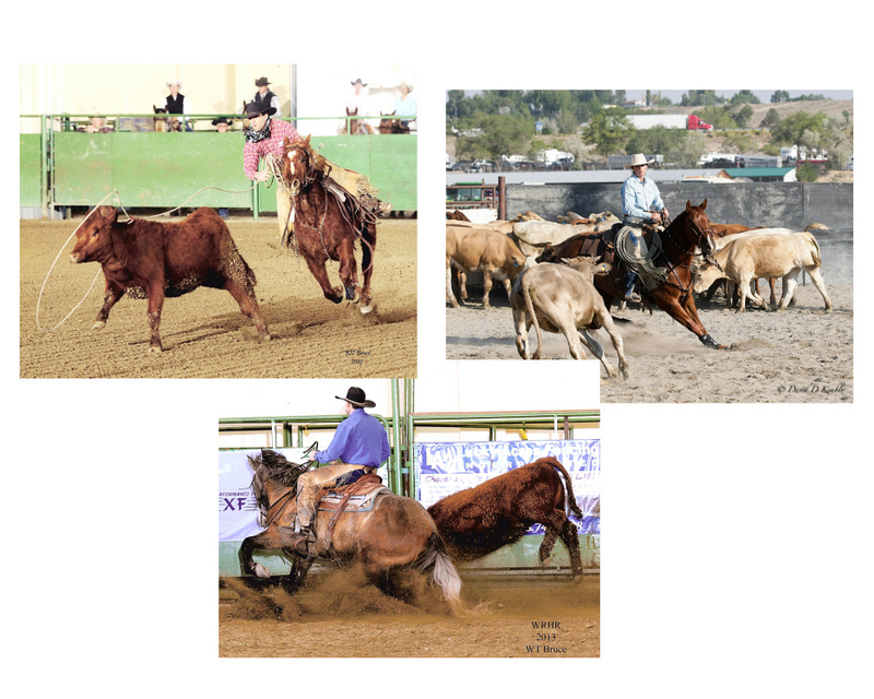 Prunty Ranch Horses performing